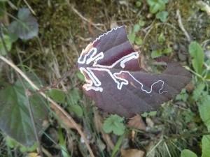 minadores_hojas