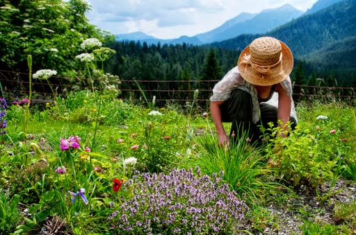 cuidar-jardin-primavera