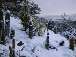 Cuida tu jardín en invierno