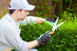 servicios de jardinería